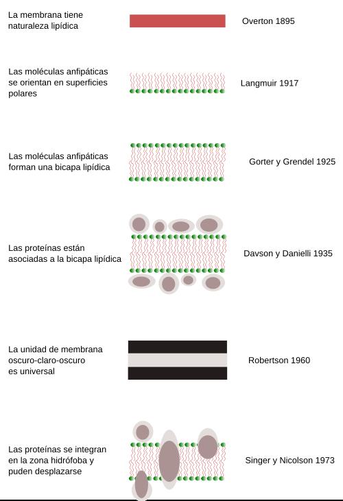 Estructura de las proteinas yahoo dating 5