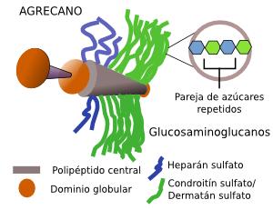 estructura quimica de las hormonas esteroideas