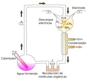 Moleculas biologicas sintesis previotica ciencias del for Que quiere decir contemporaneo