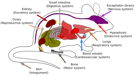 Animal organs introduction atlas of plant and animal histology animal organs and systems ccuart Gallery