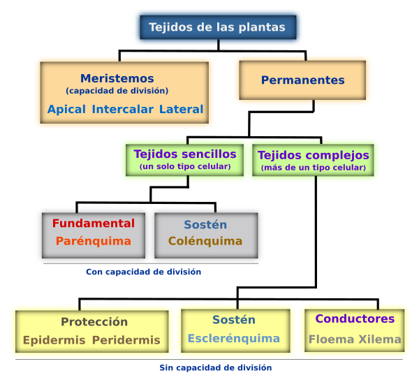 Tejidos vegetales. Introducción. Atlas de Histología Vegetal y Animal