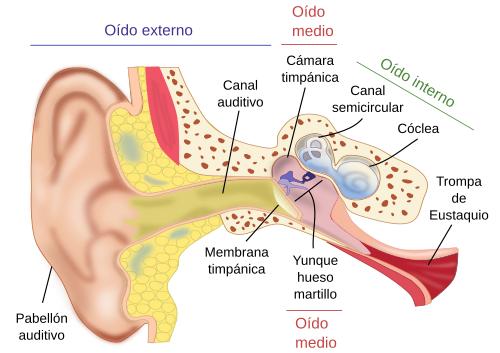 Sonrisas especiales: Los sentidos: el oido.