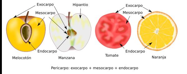 órganos Vegetales Fruto Atlas De Histología Vegetal Y Animal