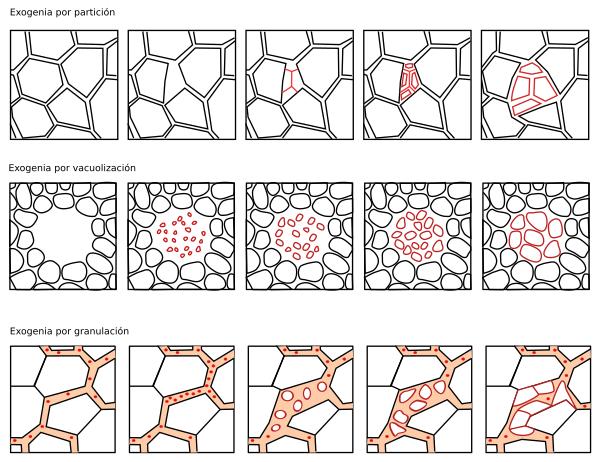 La célula. 1- Introducción. Ampliaciones. Atlas de Histología ...