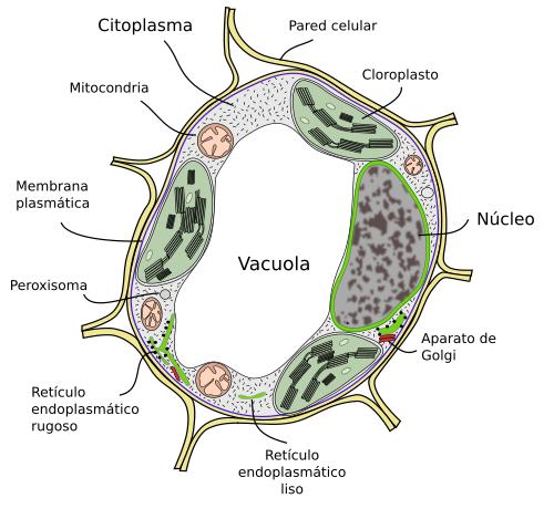 La Célula 1 Introducción Atlas De Histología Vegetal Y Animal