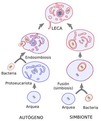 La Célula 1 Introducción Origen De Los Eucariotas Atlas