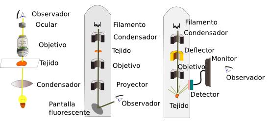Tcnicas Hitolgicas 6 Microscopio electrnico Atlas de