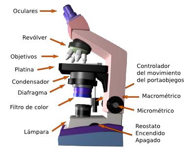 Diferentes tipos de microscopios pdf reader