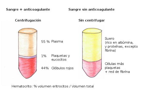 Funcion principal del hematocrito