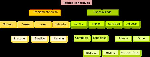 Tipos de conectivos